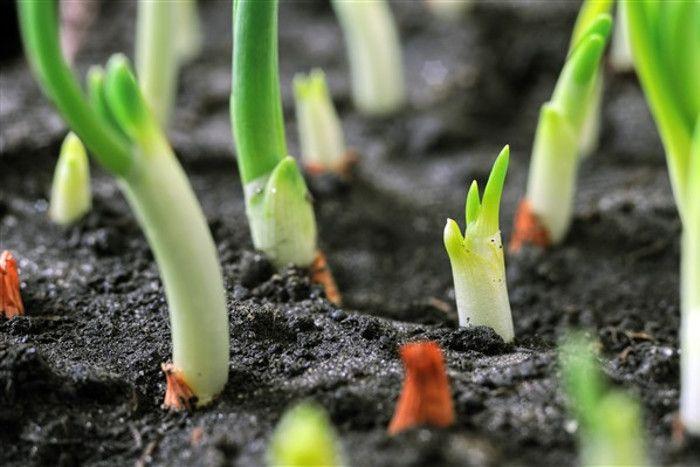 Fornitura sementi